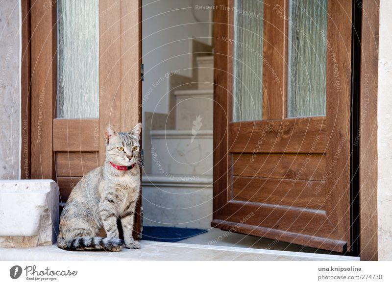 wachkatze Katze Tier Holz Stein Tür sitzen Treppe beobachten weich Eingang Haustier kuschlig bewachen Tigerfellmuster