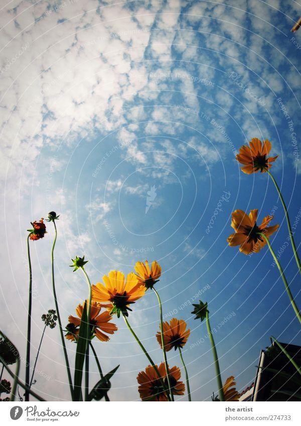 Sommerhimmel Himmel Natur blau Ferien & Urlaub & Reisen weiß Pflanze Blume Wolken Erholung Umwelt gelb Blüte Freizeit & Hobby frei Schönes Wetter