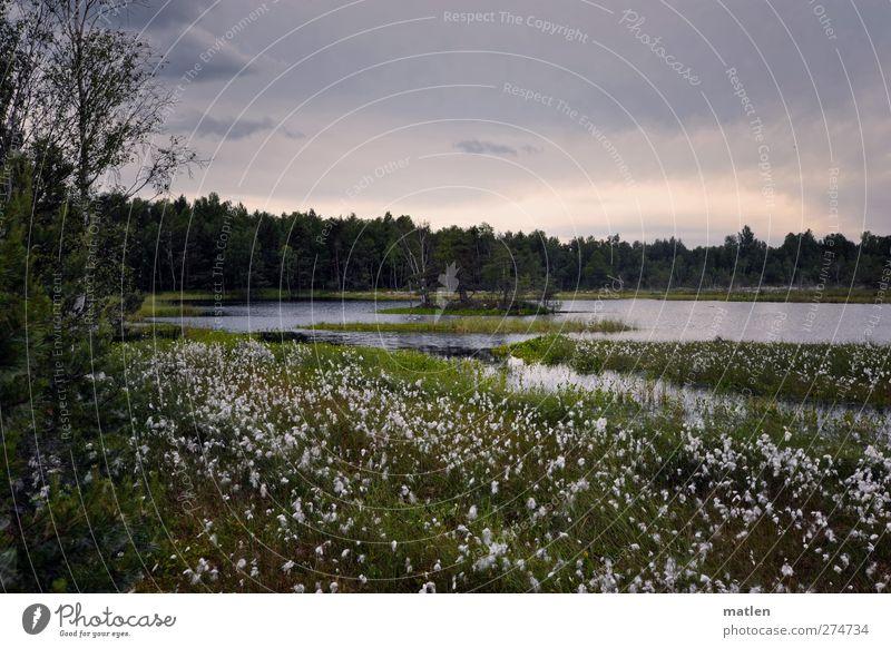 Der weisse See Landschaft Pflanze Wolken Sommer Schönes Wetter Baum Gras Sträucher Seeufer Moor Sumpf grau grün Gedeckte Farben Außenaufnahme Menschenleer