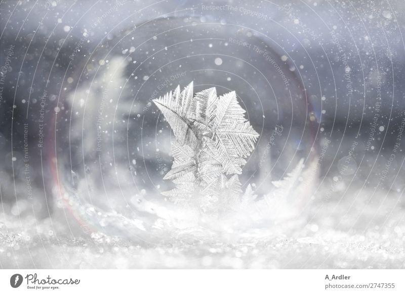 gefrorene Seifenblase im Schnee Winter Natur Schneefall Wasser außergewöhnlich fantastisch glänzend kalt schön blau weiß einzigartig elegant Frost Eiskristall