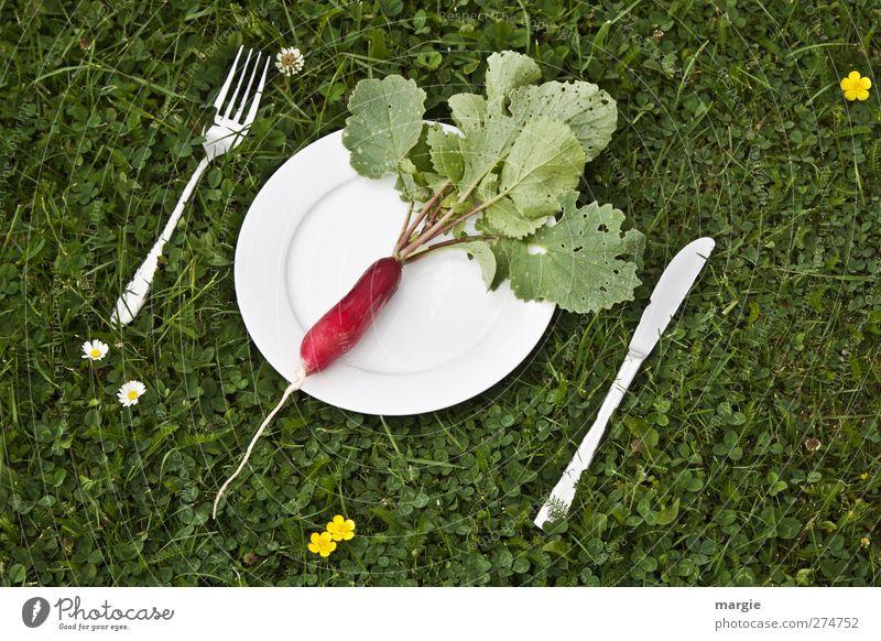Radieschen- Diät: Ein Radieschen auf einem weißen Teller mit Messer und Gabel in einer Wiese Lebensmittel Gemüse Salat Salatbeilage Rettich Ernährung Frühstück