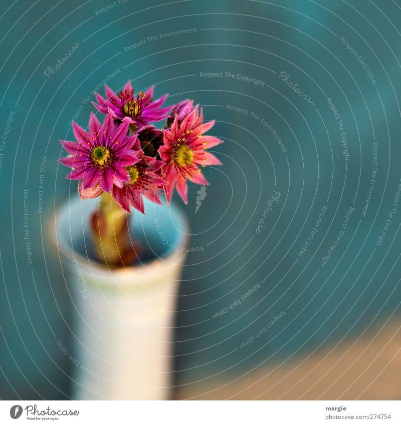 Scharfe Blümchen in einer unscharfen Vase Umwelt Natur Pflanze Blume Blatt Blüte Blühend Duft Wachstum frisch Dekoration & Verzierung Blumenstengel Blumenstrauß