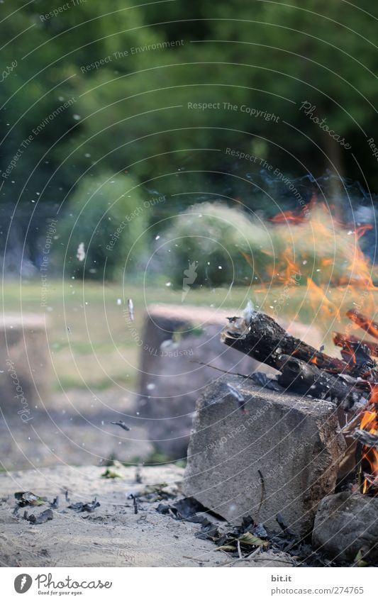 Grillplatz Natur Baum Sommer Wärme Holz Stein Stimmung glänzend Brand gefährlich Feuer Urelemente Warmherzigkeit Sicherheit Schutz heiß
