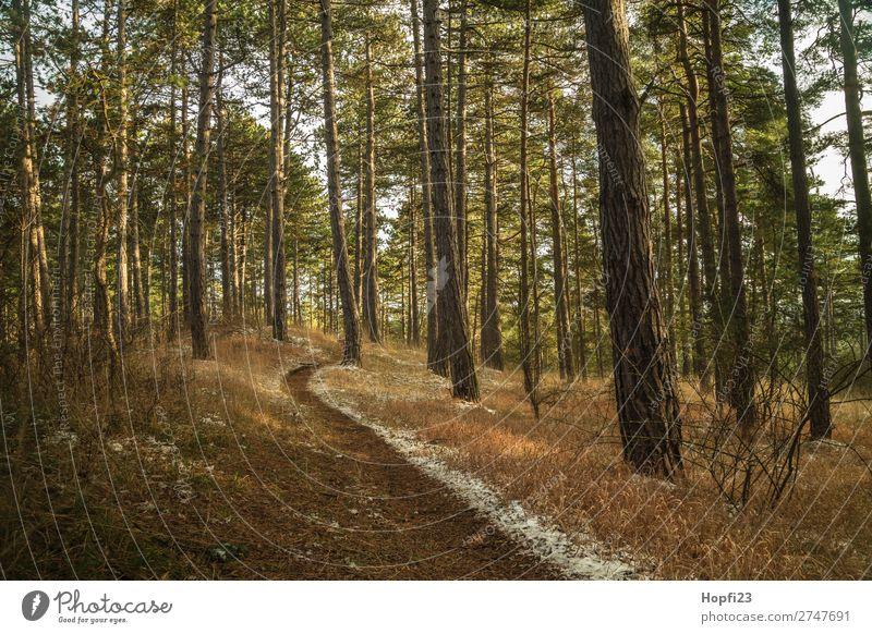 Waldweg Umwelt Natur Landschaft Pflanze Himmel Wolken Herbst Winter Klima Wetter Schnee Baum Gras Sträucher Blatt Grünpflanze Wildpflanze Wiese Hügel Bewegung