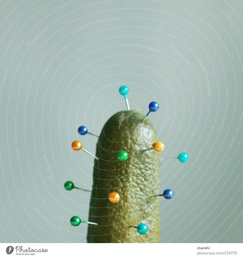 Akupunktur Lebensmittel Gemüse Ernährung blau gelb grün Gurke Nadel Kaktus lustig Stachel Sexualität Piercing stechen Spitze anstößig Farbfoto
