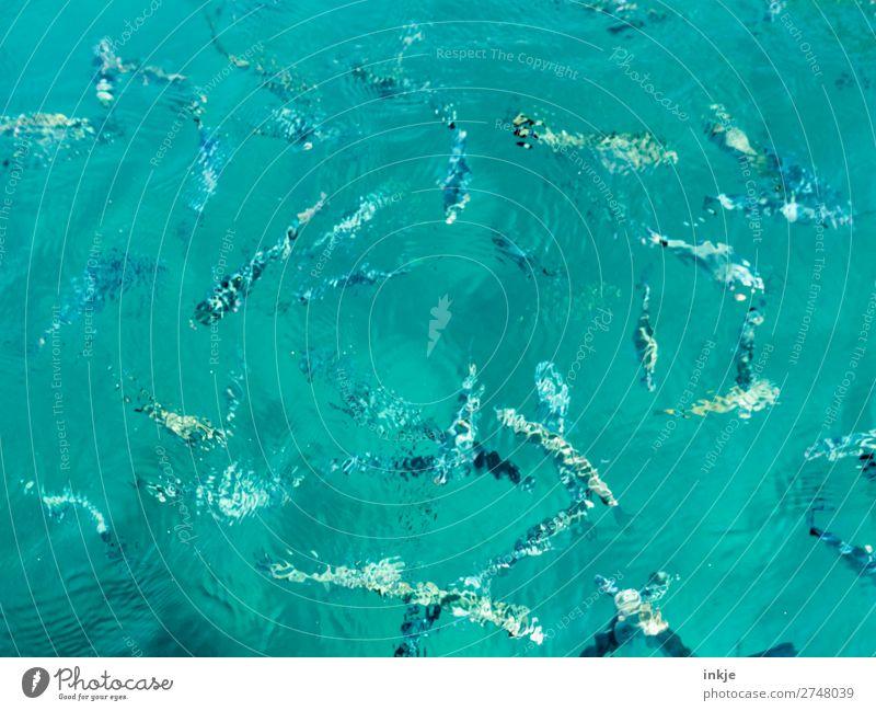 Schwarm Tier Wasser Sommer Meer Fisch Tiergruppe Schwimmen & Baden viele Meerestier Wasseroberfläche türkis Klarheit Meerwasser Farbfoto Außenaufnahme