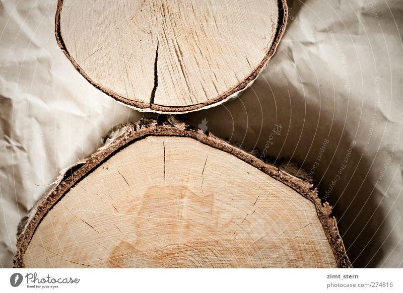 Birkenringe Handwerker Förster Tischler Baum Papier Holz alt authentisch natürlich rund trocken braun Holzscheibe Jahresringe knittern Gedeckte Farben