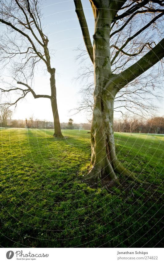 Parkgenuss Natur grün Sonne Baum Erholung ruhig Umwelt Gefühle Wiese Freiheit Park Freizeit & Hobby leuchten ästhetisch Perspektive Schönes Wetter