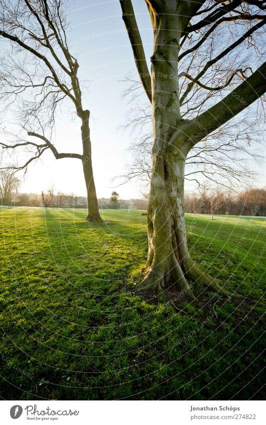 Parkgenuss Umwelt Natur Sonne Sonnenlicht Schönes Wetter Wiese ästhetisch Gefühle Optimismus grün Sonnenstrahlen Abendsonne ruhig Erholung Außenaufnahme