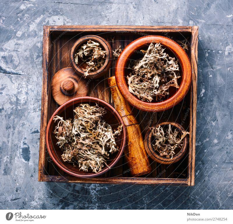Getrocknetes Isländisches Moos Kraut Medizin isländisch Naturmedizin Heilkraut Kräutermedizin natürlich Pflanze Kräuterbuch Flechten Behandlung Kasten Blume