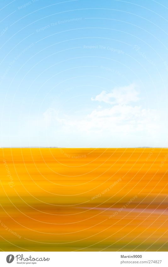 Wildflowers II Himmel Natur Sommer Sonne Landschaft ruhig Frühling Herbst Freiheit Horizont Feld Erde beobachten Schönes Wetter Fernweh Optimismus