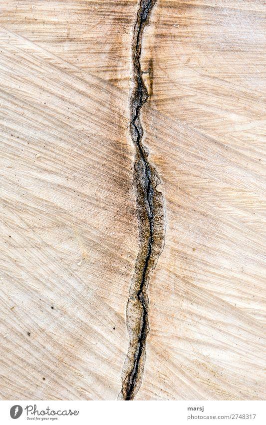 halbe halbe Riss Sägeschnitt Baumrinde Teilung Holz braun Maserung Jahresringe Einschluss sägerauh Farbfoto Gedeckte Farben Außenaufnahme Nahaufnahme Muster
