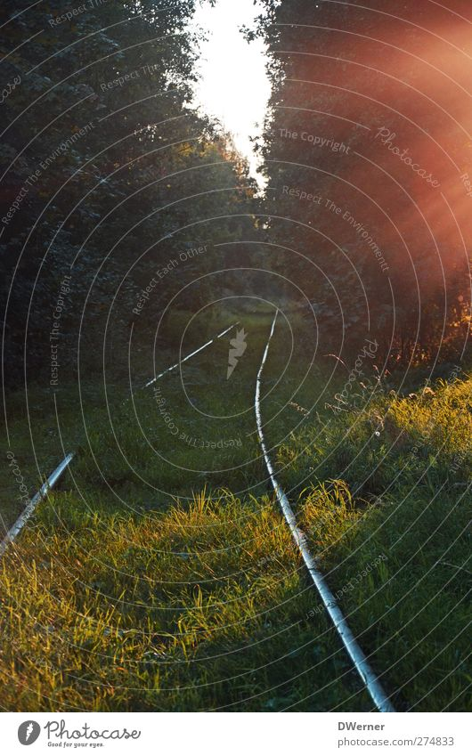 Die Bahn macht mobil... Natur grün Baum Pflanze Sonne ruhig Wald Gras träumen Stimmung Feld Ausflug Abenteuer leuchten Hoffnung Vergänglichkeit