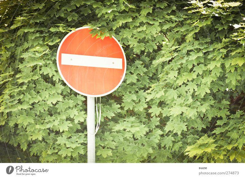 Rothschild Natur grün rot Blatt Umwelt Wachstum Verkehr Zeichen Baumkrone Verbote graphisch Warnschild Verkehrsschild Verkehrszeichen Verbotsschild