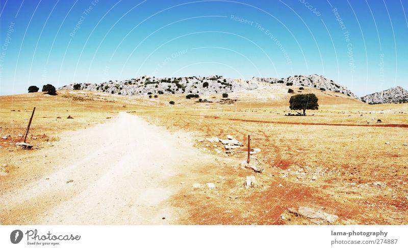 Road to nowhere [LV] Natur Landschaft Sand Sonne Klima Dürre Baum Felsen Berge u. Gebirge Steppe Nationalpark Straße Wege & Pfade heiß trocken Farbfoto
