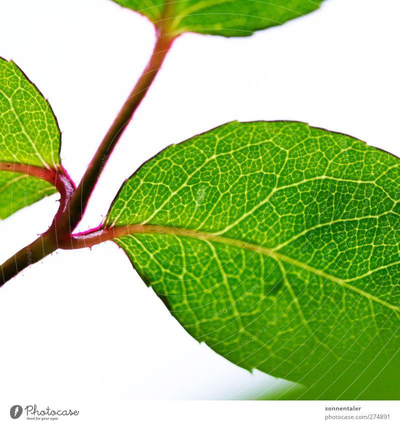blatts da Freude Glück schön Körperpflege Gesundheit Wellness harmonisch Zufriedenheit Erholung Sommer Garten Dekoration & Verzierung Natur Pflanze Frühling