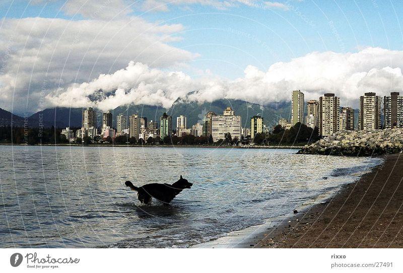 Strandhund Wasser Hund Hochhaus Schwimmen & Baden Skyline Bucht Kanada Vancouver Nordamerika British Columbia Wolkenhimmel Wolkenberg