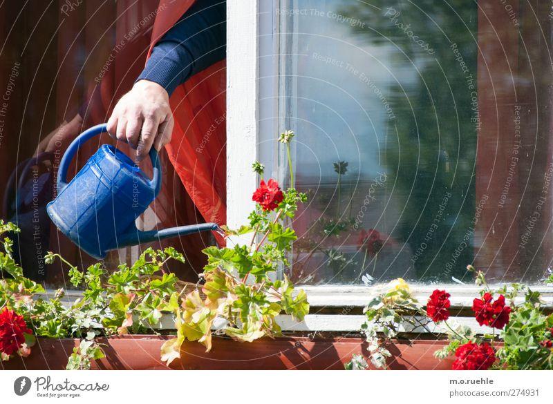 das, was wasser will Mensch Senior Leben Arme Hand 1 Umwelt Natur Frühling Schönes Wetter Blume Gießkanne blau Wachstum gießen Blumenkasten Fenster