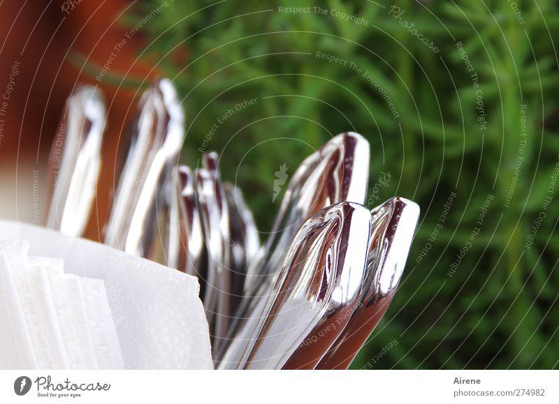 schöner essen Büffet Brunch Gedeck Besteck Messer Gabel Löffel Serviette Papierservietten Pflanze Grünpflanze Topfpflanze Rosmarin Kräuter & Gewürze