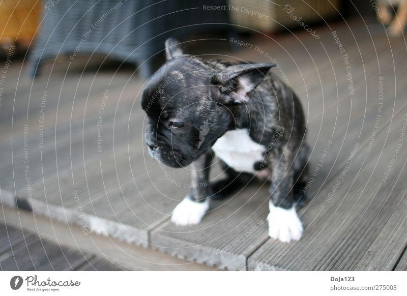 Trau ich mich oder nicht Hund Tier Tierjunges Freizeit & Hobby Abenteuer niedlich entdecken Mut Höhenangst Haustier Willensstärke Nervosität Schüchternheit Tierliebe Tapferkeit