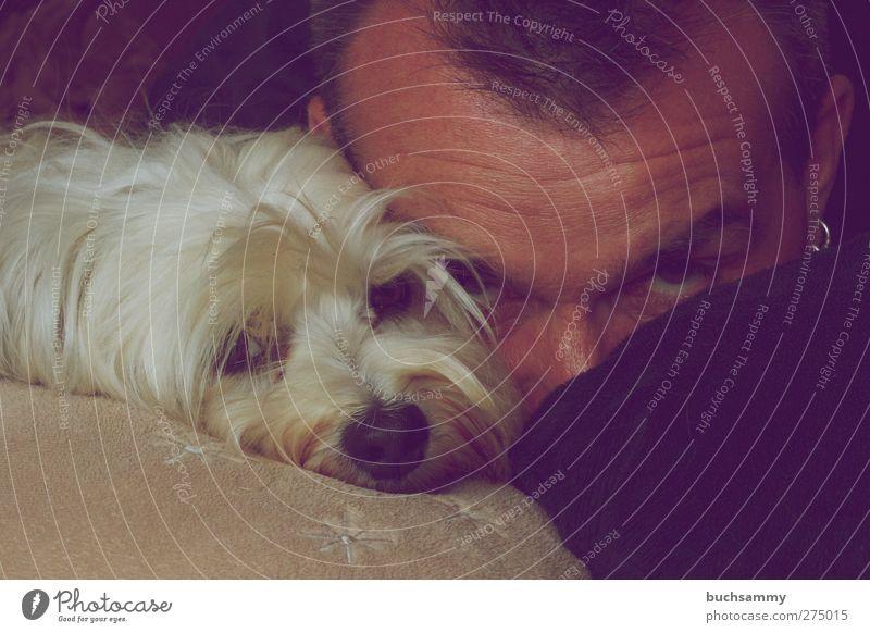 Mensch mit Havaneser Tier Haustier Hund 1 Liebe liegen ästhetisch Zusammensein niedlich weiß Gefühle Selbstportrait Farbfoto Innenaufnahme Porträt Tierporträt