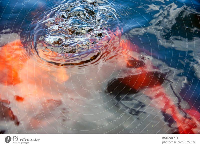 Torf Mensch Natur Jugendliche Wasser Ferien & Urlaub & Reisen Sommer Freude Erwachsene Umwelt nackt Kopf Schwimmen & Baden Junger Mann Körper Wellen Klima