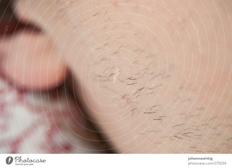 sonntagmorgen. II Mensch Jugendliche ruhig Erwachsene Gesicht Erholung Junger Mann blond liegen 18-30 Jahre Haut Behaarung maskulin schlafen Bart ausruhend