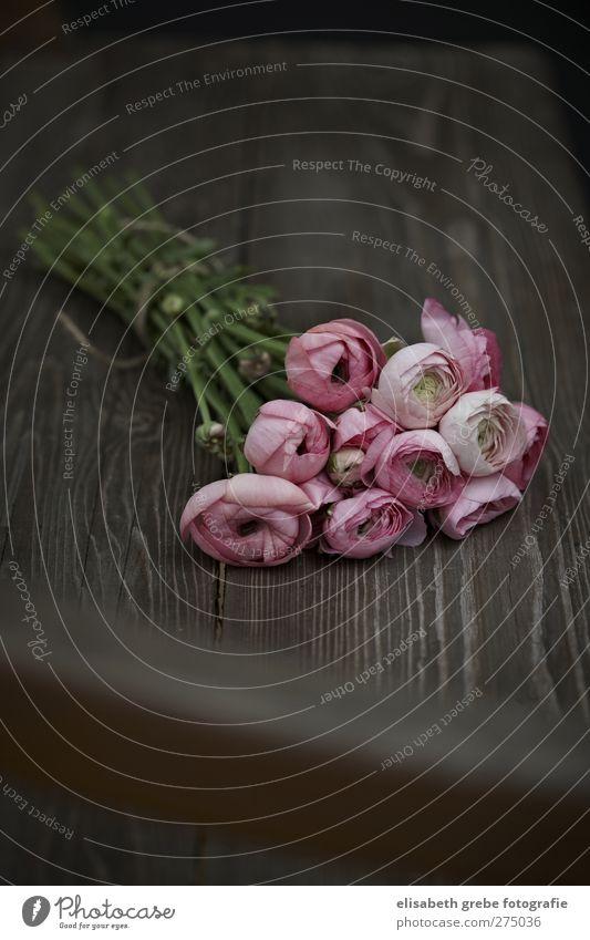 Ranunkel Natur Pflanze Frühling Blume Blüte Blumenstrauß Wiesenblume Garten Holz Stimmung Idylle Holzbank Gartenbank Farbfoto Gedeckte Farben Innenaufnahme