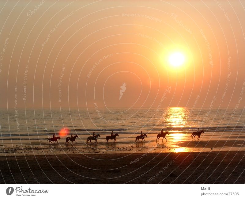 the kings horses Sonne Meer Strand Pferd Atlantik Reiter