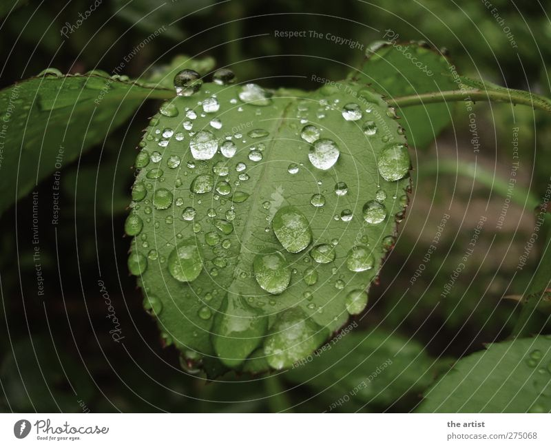 nach dem Regen Natur grün Pflanze Blatt Garten nass frisch Wassertropfen