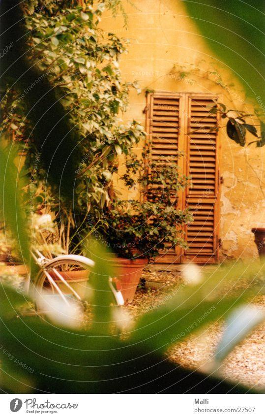 Hinterhof grün Holztür Florenz gelb Durchblick Einblick historisch Bauernhof Tor alt