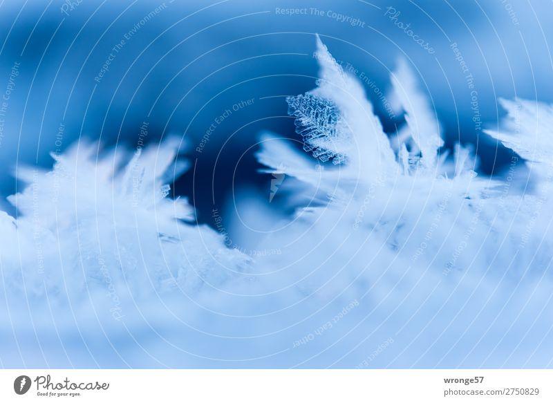 Zartes Eisblättchen II Natur Winter Frost kalt nah blau weiß Eiskristall Eisskulptur Makroaufnahme Querformat zart zerbrechlich filigran Farbfoto mehrfarbig