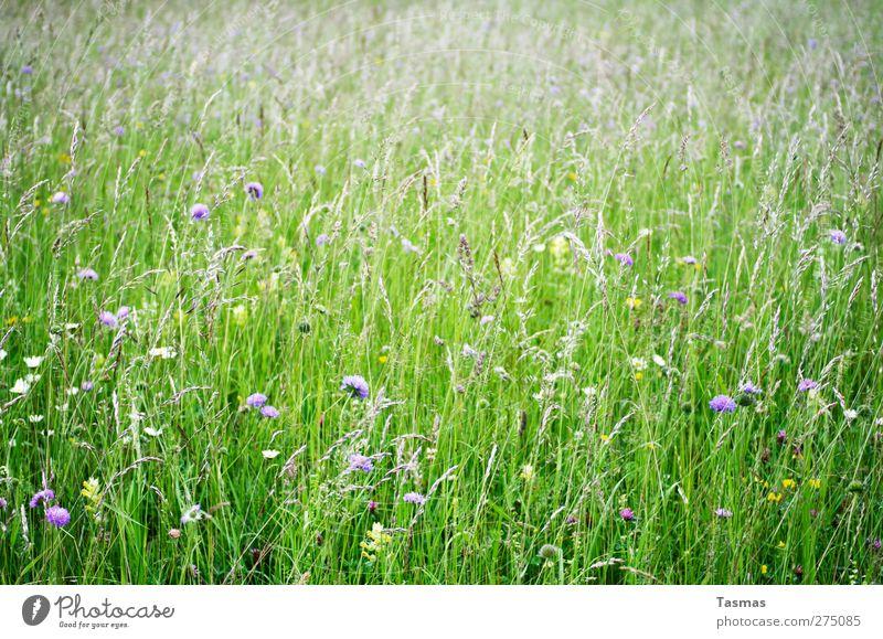 Bloom Umwelt Natur Pflanze Tier Frühling Sommer Blume Gras Blüte Grünpflanze Wildpflanze Garten Wiese natürlich grün schön Zufriedenheit nachhaltig Farbfoto