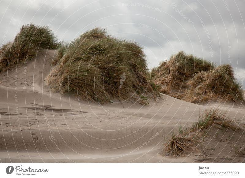 wind in den dünen. Sommer Meer Einsamkeit Wolken Landschaft Gras Sand Wind Insel Sträucher Wandel & Veränderung Nordsee Stranddüne Sommerurlaub Dünengras