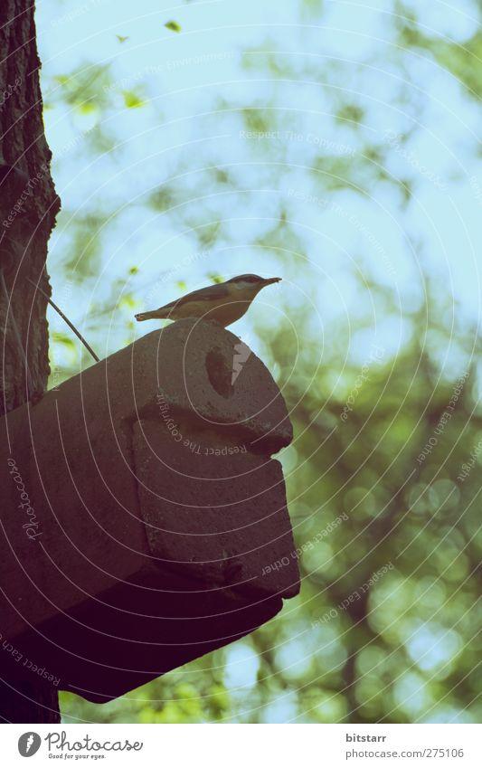 Dachgeschoss Natur Tier Luft Himmel Sommer Schönes Wetter Baum Garten Park Wald Stadt Wildtier Vogel 1 Brunft bauen beobachten fliegen Jagd