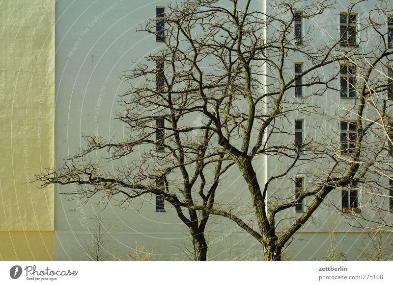 Wohnen Stadt schön Baum Winter Haus Fenster Wand Herbst Mauer Wetter Klima Fassade Häusliches Leben gut Schönes Wetter Baumkrone
