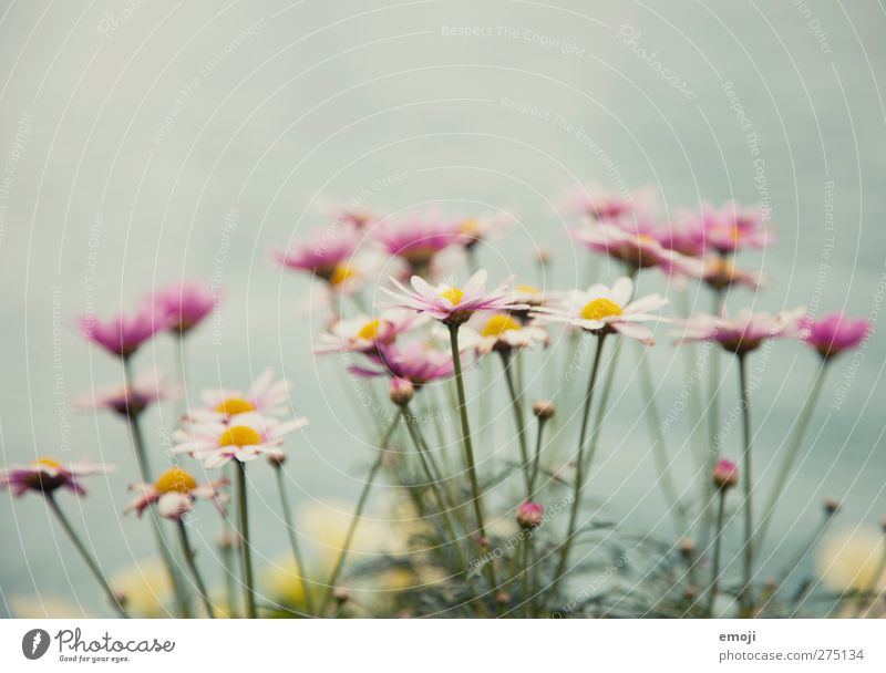 Pastell Natur grün Pflanze Blume Blatt Umwelt Frühling Blüte natürlich Sträucher Grünpflanze Pastellton