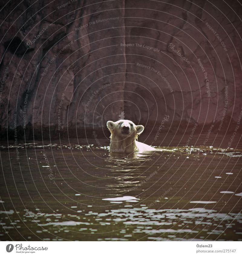 Uffpasse Freude Tier Erholung gefährlich Abenteuer Sicherheit Coolness Neugier Konzentration Stolz Respekt stagnierend