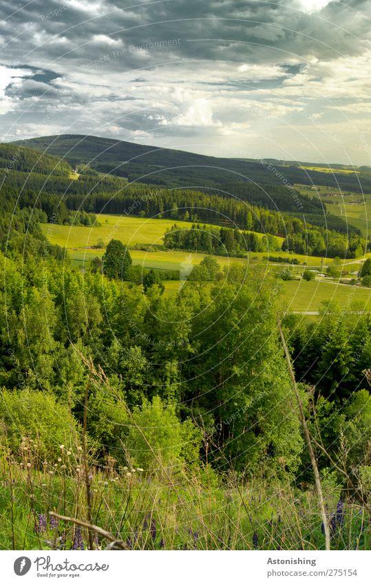 Mühlviertel Umwelt Natur Landschaft Pflanze Luft Himmel Wolken Horizont Sommer Wetter Schönes Wetter Baum Gras Sträucher Wiese Wald Hügel blau grau grün