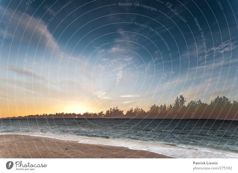 Dreamless Natur Ferien & Urlaub & Reisen Sommer Pflanze Sonne Strand Erholung Landschaft Ferne Umwelt Freiheit Küste Sand Wellen Wetter Wind