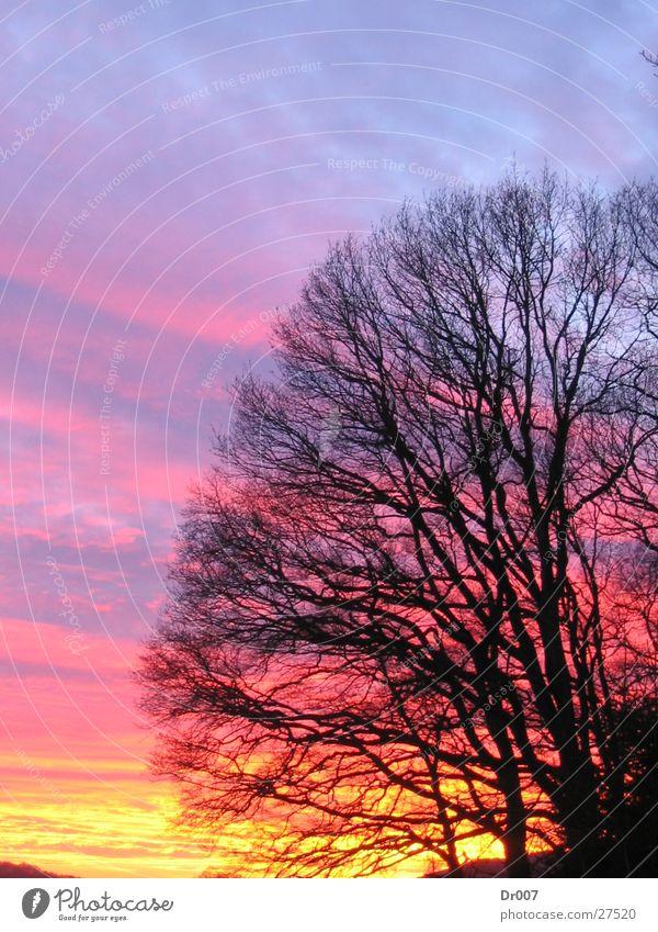 Sky Himmel Sonnenuntergang schön Ast