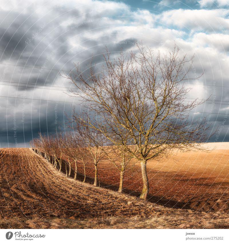Eins nach dem Anderen Natur Landschaft Himmel Wolken Horizont Herbst Wetter Wind Baum Feld blau braun grau schwarz weiß gleich Idylle ruhig Umwelt Baumreihe