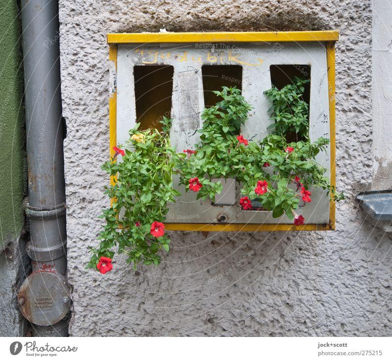 Blümchen - Automat Stadt schön Blume Wand Blüte Stil Mauer Berlin außergewöhnlich Stein Metall Fassade Wachstum Blühend Idee einzigartig