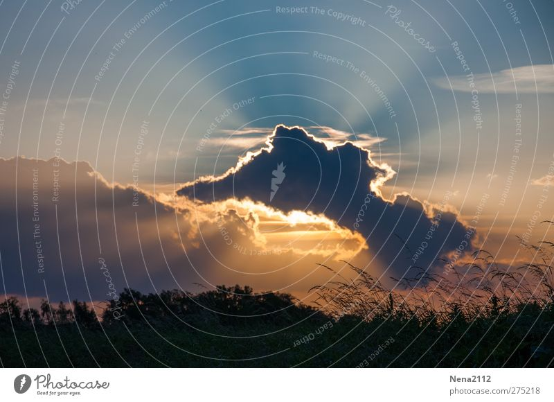 Contre jour Natur Landschaft Himmel Wolken Gewitterwolken Sommer Klima Wetter Schönes Wetter Gras Wiese Feld bedrohlich schön Wärme orange Farbfoto