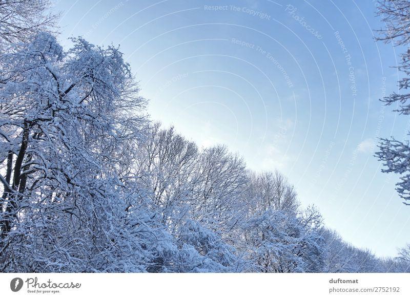 Winterwonder Himmel Natur blau Baum Erholung ruhig Wald Berge u. Gebirge kalt Schnee oben wandern Eis Schönes Wetter fantastisch