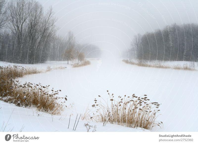 See im Nebel des Wintersturms schön ruhig Schnee Natur Landschaft Wetter Schneefall Baum Gras Wald frieren trist weiß Gelassenheit Frieden Dunst gefroren