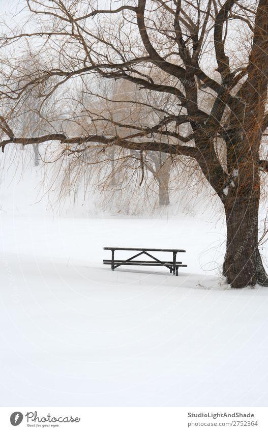 Picknicktisch im Schnee unter einem Baum schön ruhig Winter Tisch Natur Landschaft Wetter Nebel Schneefall frieren trist weiß Gelassenheit Einsamkeit Frieden
