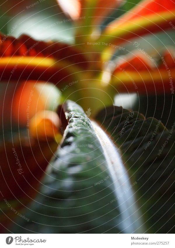 pflanzlicher Ameisenweg Natur weiß grün Sommer Pflanze rot Blume Blatt Umwelt Ferne gelb grau Garten Park braun orange
