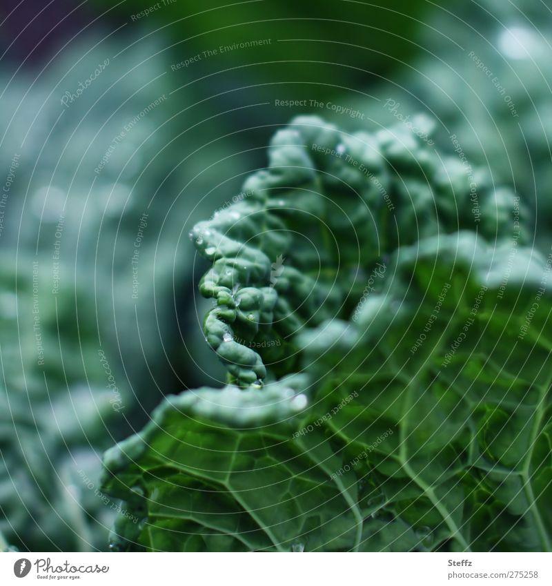 Vegi-Vorrat Natur Sommer Pflanze Blatt Garten Lebensmittel frisch Ernährung Gemüse Vegetarische Ernährung Blattadern Nutzpflanze Kohl dunkelgrün