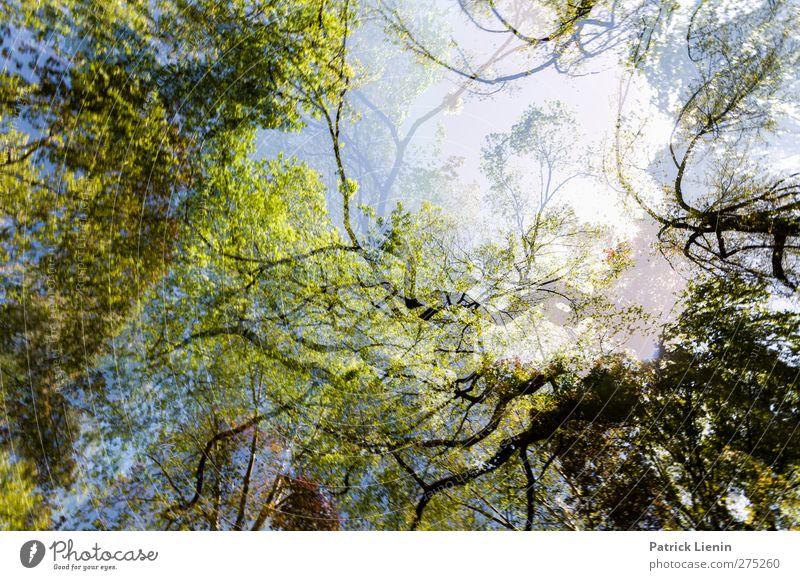 Organix Natur grün Baum Sommer Pflanze Wald Erholung Umwelt Frühling Freiheit Kunst Wetter Zufriedenheit natürlich ästhetisch Urelemente